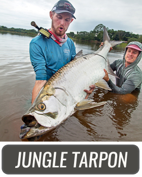 JUNGLE TARPON